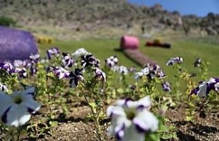 Sivrihisar çiçeklerle renkleniyor