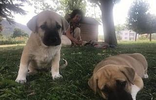 (Özel) Şikayet 5 yavru köpeği annesiz bıraktı