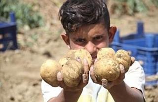 Üreticiyi verimiyle umutlandıran patates fiyatıyla...