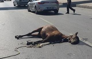 Yüzlerce kiloluk atlar kazanın etkisiyle böyle...