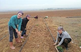 Eskişehir'de kadın çiftçiler için 'Lavanta'...