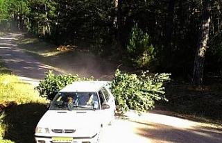 Ormanlardaki usulsüzlükler foto kapanlara yakalandı