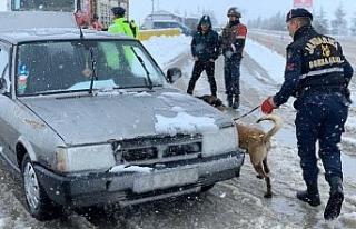 (özel) Jandarma trafik ekiplerinden köpekli trafik...