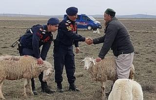 Rus koyun hırsızı yakalandı