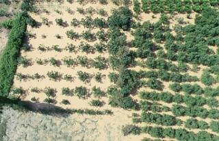 Afet bölgesinde binlerce dönüm tarım arazisi sular...