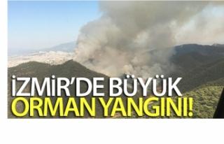İzmir'in Balçova ilçesinde orman yangını!