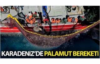 Karadeniz'de palamut bereketi