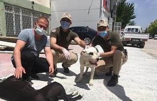 Köpek çaldığı iddia edilen 3 kişi gözaltına...