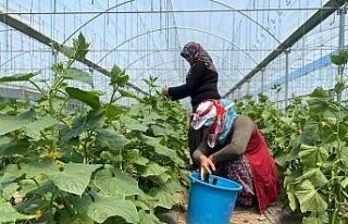 Bu yöntem sayesinde vatandaşlar meyve ve sebzeleri...