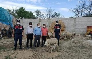 Eskişehir'de çalınan 23 küçükbaş hayvan Afyonkarahisar'da...