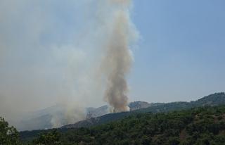 Orman yangınına havadan ve karadan müdahale sürüyor