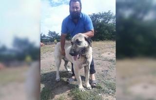 Eskişehir'de çalınan köpek Ankara'da bulundu