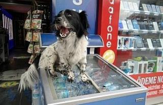 """Market sahibinin köpeği """"Dayı"""" mahallenin maskotu..."""