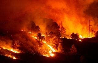 Dünya genelinde çıkan yangınlarda milyonlarca...