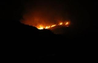 Gece 4 helikopter devreye girdi, Bodrum'da yangın...