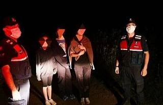 Köpekten korkup mısır tarlasına saklanan 3 çocuğu...