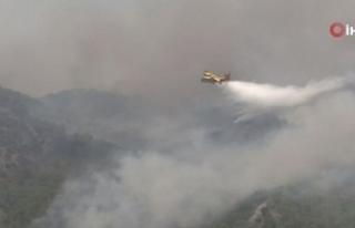 Köyceğiz'de yangınla mücadele çalışmaları...