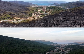 Marmaris'in yangın öncesi ve sonrası