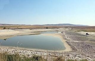 Sulama göletinde su kalmayınca balıkçılar akın...