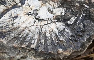 65 milyon yıllık! Kaya parçasında deniz canlısı...