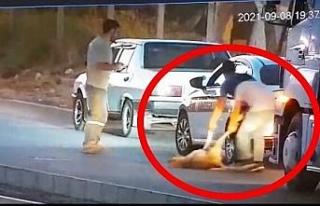 Aracıyla çarptığı köpeği ölüme böyle terk...