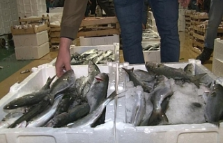 Marmara Denizi'nde lüfer bolluğu balıkçıların...