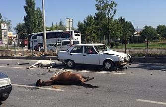 Kazaya sebebiyet veren iki at telef oldu