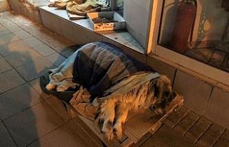 Hayvanseverlerin şefkati takdir topluyor