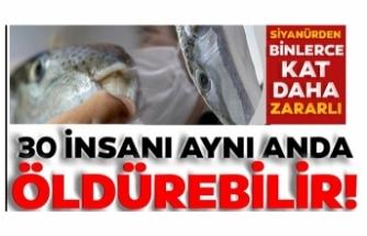 Balon balığı 30 insanı aynı anda öldürebilir