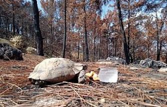 Yemeklerini yangından sağ kurtulan hayvanlarla paylaştı