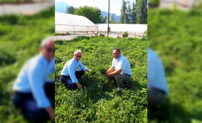 Eskişehir tıbbi bitkide atağa kalkıyor