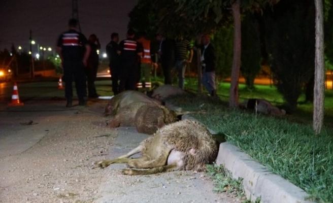 Otomobil koyun sürüsüne daldı: 2 yaralı