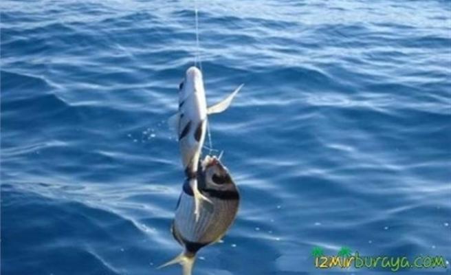 Yasak malzeme kullanarak balık avlayan şahıs jandarma ekiplerince yakalandı
