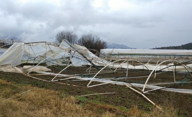 Şiddetli rüzgâr ve yağmurdan toplam 220 sera hasar gördü