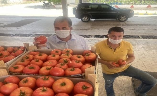Sarıcakaya domatesi piyasayı rahatlattı