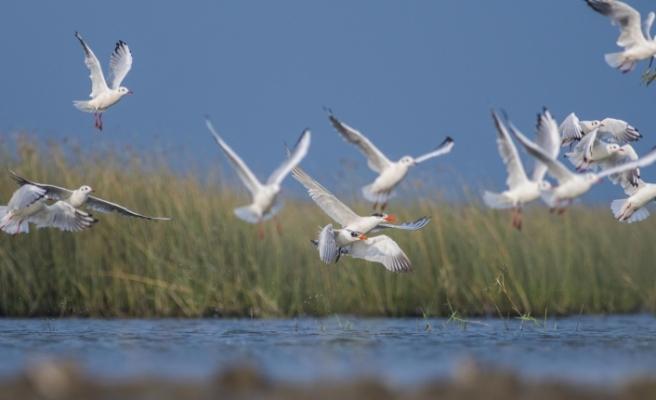Göç yolundaki kuşların renkli görüntüleri