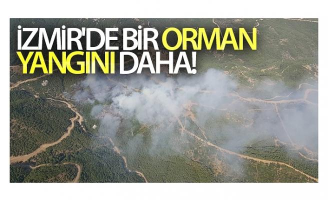 İzmir'de bir orman yangını daha!