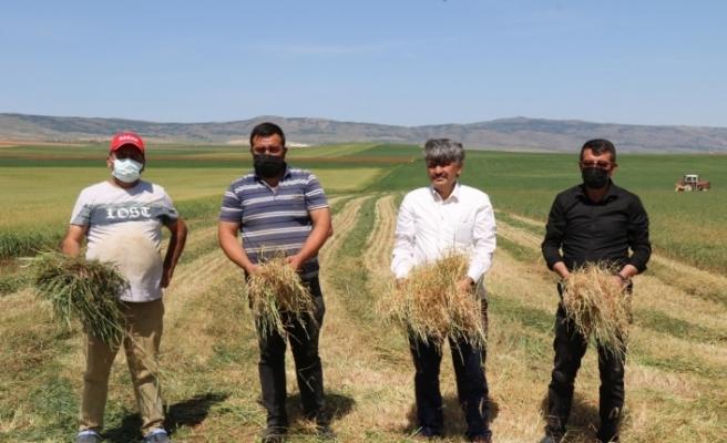 Kuraklık ve sıcak hava arpa ile buğdayı vurdu