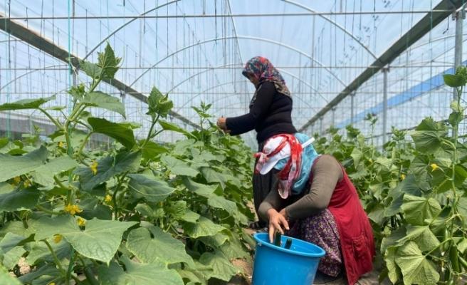 Bu yöntem sayesinde vatandaşlar meyve ve sebzeleri ucuza satın alıyor