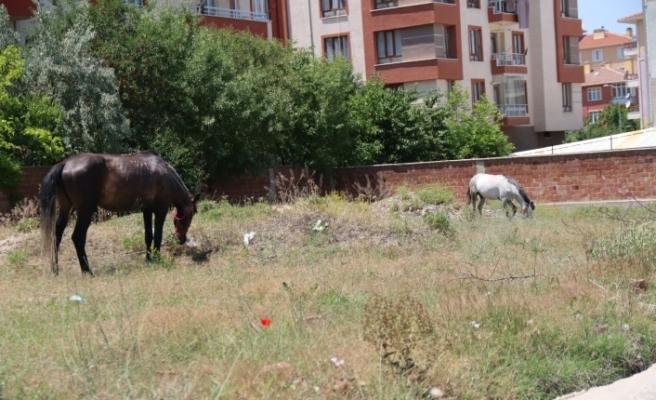 Başıboş atlar yine sahnede