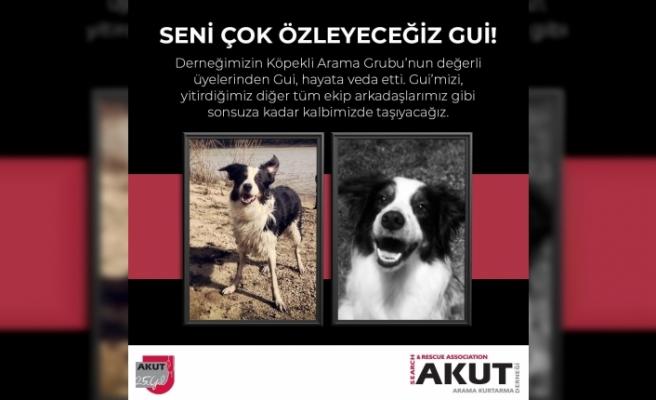 AKUT'un emektar arama köpeği Gui hayatını kaybetti