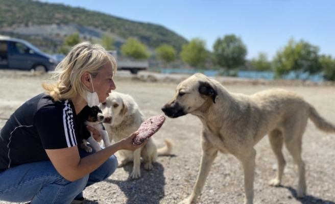 Çenesi kırıldı, sağlığına kavuşunca yeniden sokak hayvanlarına koştu