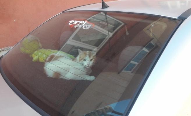 Açık kalan araç camı kediye gecelik ev oldu