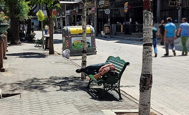Kavurucu sıcağa aldırış etmeden güneşin altında uyudu