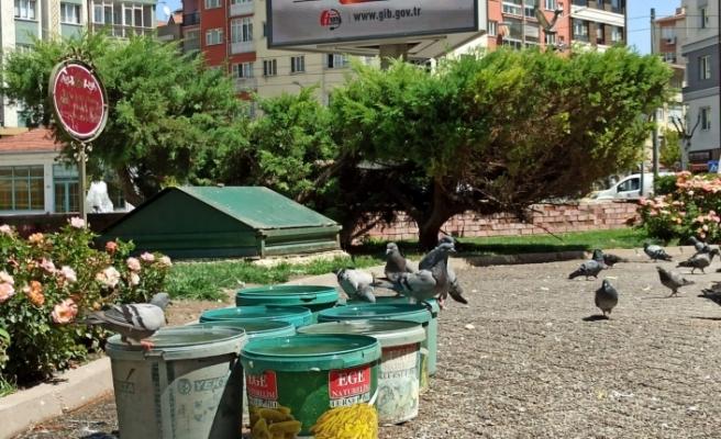Sokak hayvanlarına 20 yıldır kova kova su taşıyor