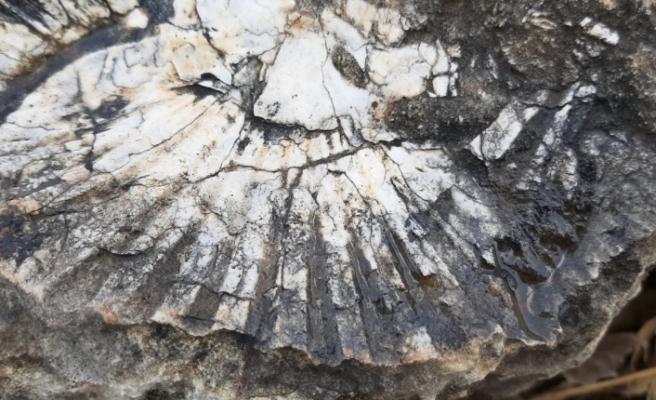 65 milyon yıllık! Kaya parçasında deniz canlısı bulundu