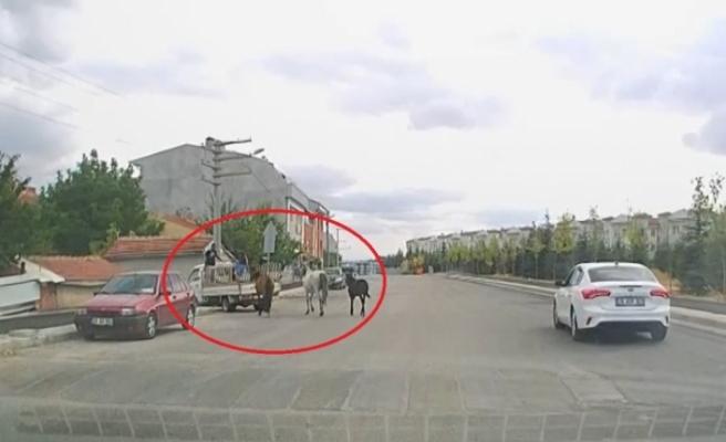 Kamyonetin arkasına bağladıkları atları acımasızca koşturdular