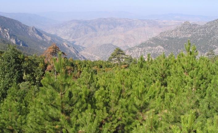 Eskişehir'de ormanalara giriş yasağı