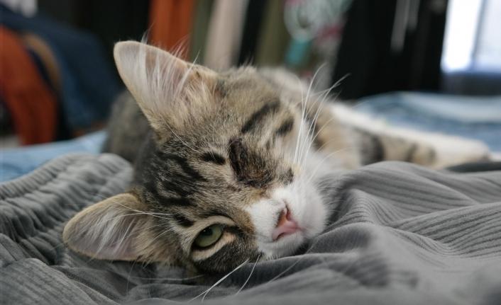 Kimsenin istemediği tek gözü kör kedi bir mağazanın gözbebeği oldu